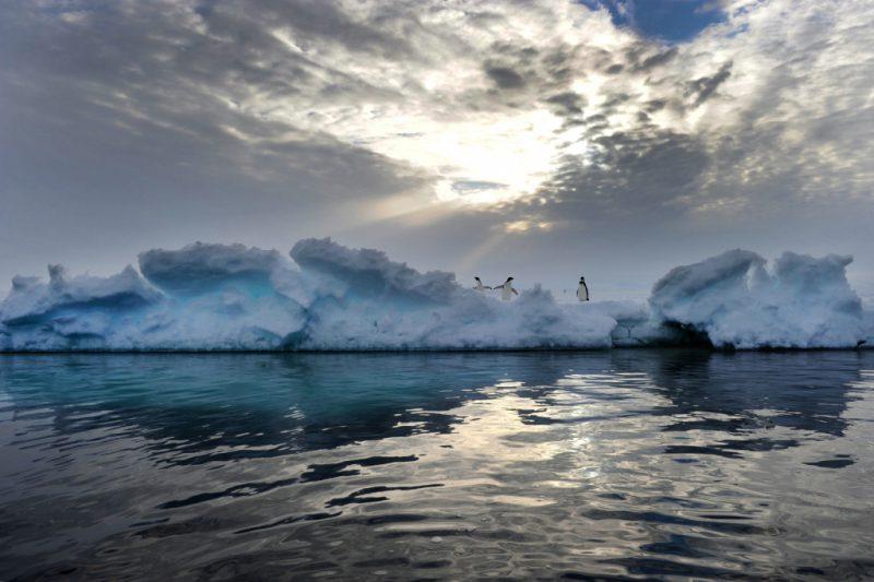 Плавучие льдины в море