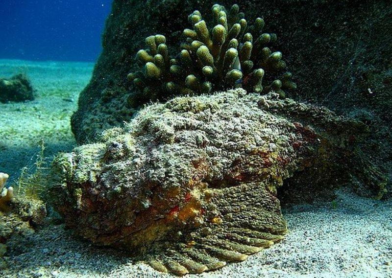 Самая ядовитая рыба в Тихом океане