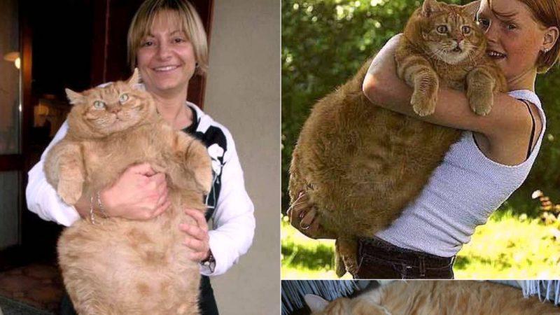 Кот из Дании