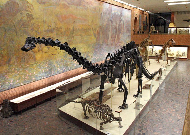 Палеонтологичкский музей