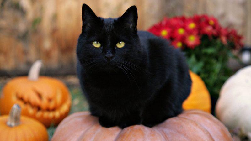 Примета черный кот