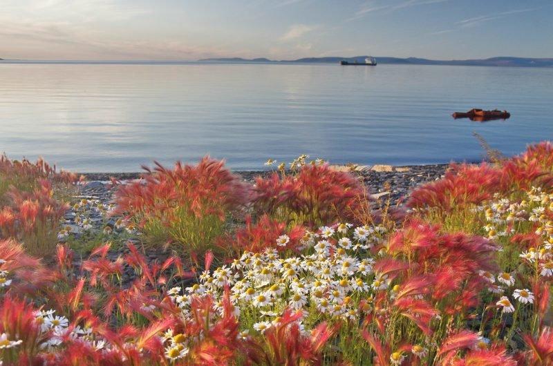 Море Лаптевых весна