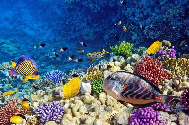 Красное море фауна