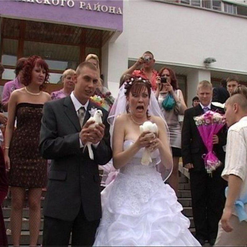 свадьба голуби