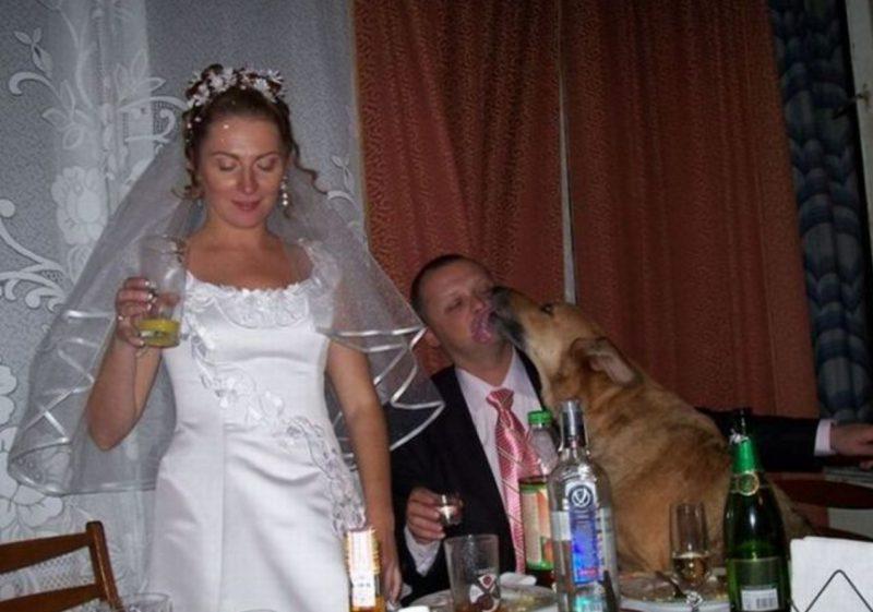 свадьба собака