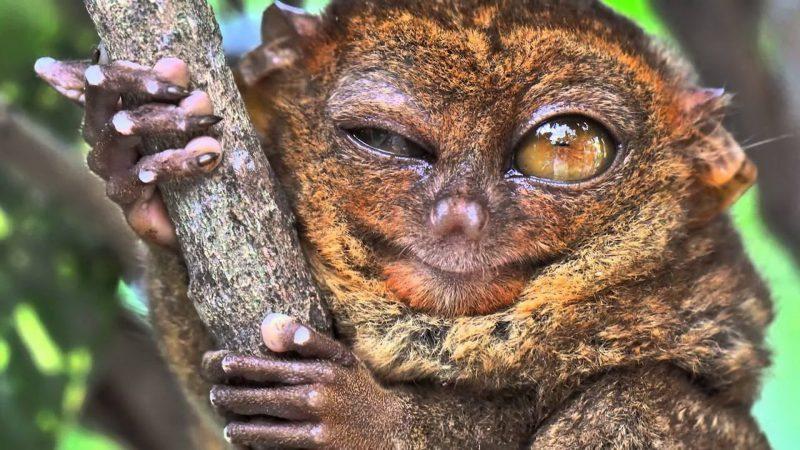 10 самых ненормальных животных
