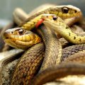 Самые ядовитые и опасные змеи в мире – особенности рептилий