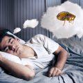 К чему снятся блохи – расшифровка сновидений