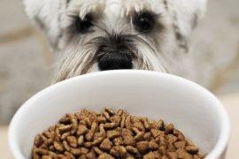 Рейтинг сухих кормов для собак – список марок и оценки