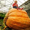 Самая большая тыква в мире
