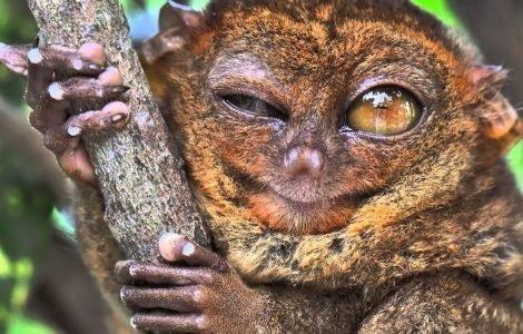 10 самых ненормальных животных в мире