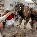 Что за праздник Курбан-байрам