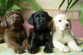 Самые умные породы собак. Список пород и фото