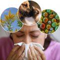 Действенные способы борьбы с аллергией