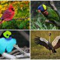 Какие птицы считаются самыми красивыми в мире