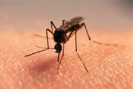 Сколько живет комар?