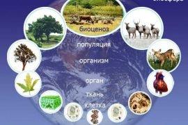 Что такое биосистема: определение и виды