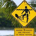 Самая опасная медуза в мире