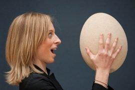 Самые большие яйца в мире