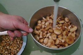 Как варить грибы правильно – лучшие советы