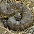 Самые опасные змеи в мире – где они обитают