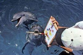 Самый умный дельфин в мире