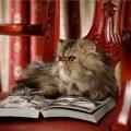 Самые умные породы кошек: топ-10