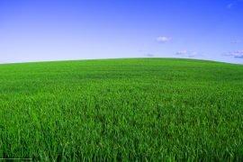 Почему трава зеленая и от чего это зависит?