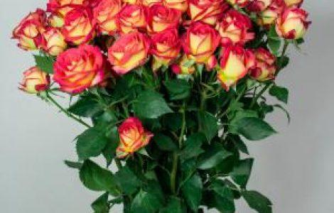 Букет из роз – то, что порадует каждого