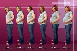Сколько месяцев в 24 неделях беременности?