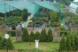 Почему саженцы растений нужно покупать в питомниках