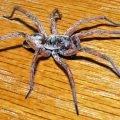 Самые большие пауки в мире – ТОП-7 с фото