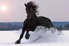 К чему снится лошадь и что означает сон?