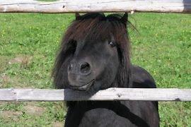 Самые маленькие лошади в мире – ТОП-7 пород с фото