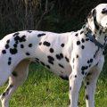 Самые опасные собаки в мире – ТОП-10 с фото