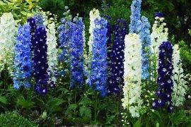 Цветы, способные на убийство