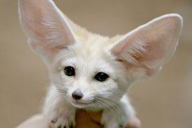 Самые милые существа на планете