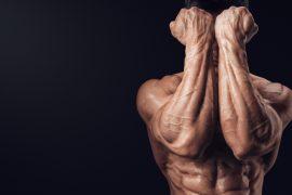 Анатомия человека – где находится предплечье?