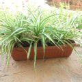 ТОП-10 полезных растений для дома и офиса
