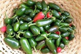 Перец Халапеньо: польза, вред, рецепты