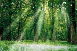 Самые большие деревья на планете