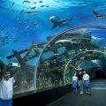 Посещение океанариума: как его правильно выбрать?