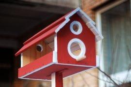 Как сделать кормушку для птиц своими руками: выбираем несколько вариантов