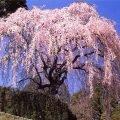 Самые красивые цветы в мире – ТОП-10