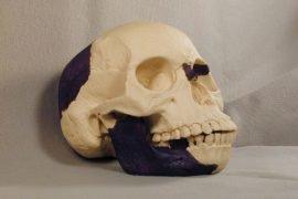 7 главных заблуждений об эволюции