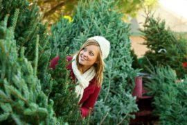 ТОП-5 советов по выбору новогодней елки