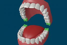 Сколько у человека зубов в зависимости от возраста