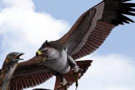Самая большая летающая птица в мире