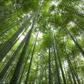 Самая высокая трава на земле