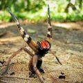 Самый опасный паук в мире – фото и места обитания